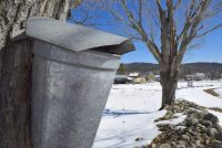 Sap bucket at the farmstead.jpg