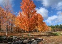 fall orchard.jpg