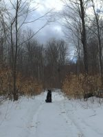 The Sap Hound in the Sugarbush