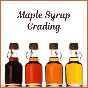 NH Maple Grading