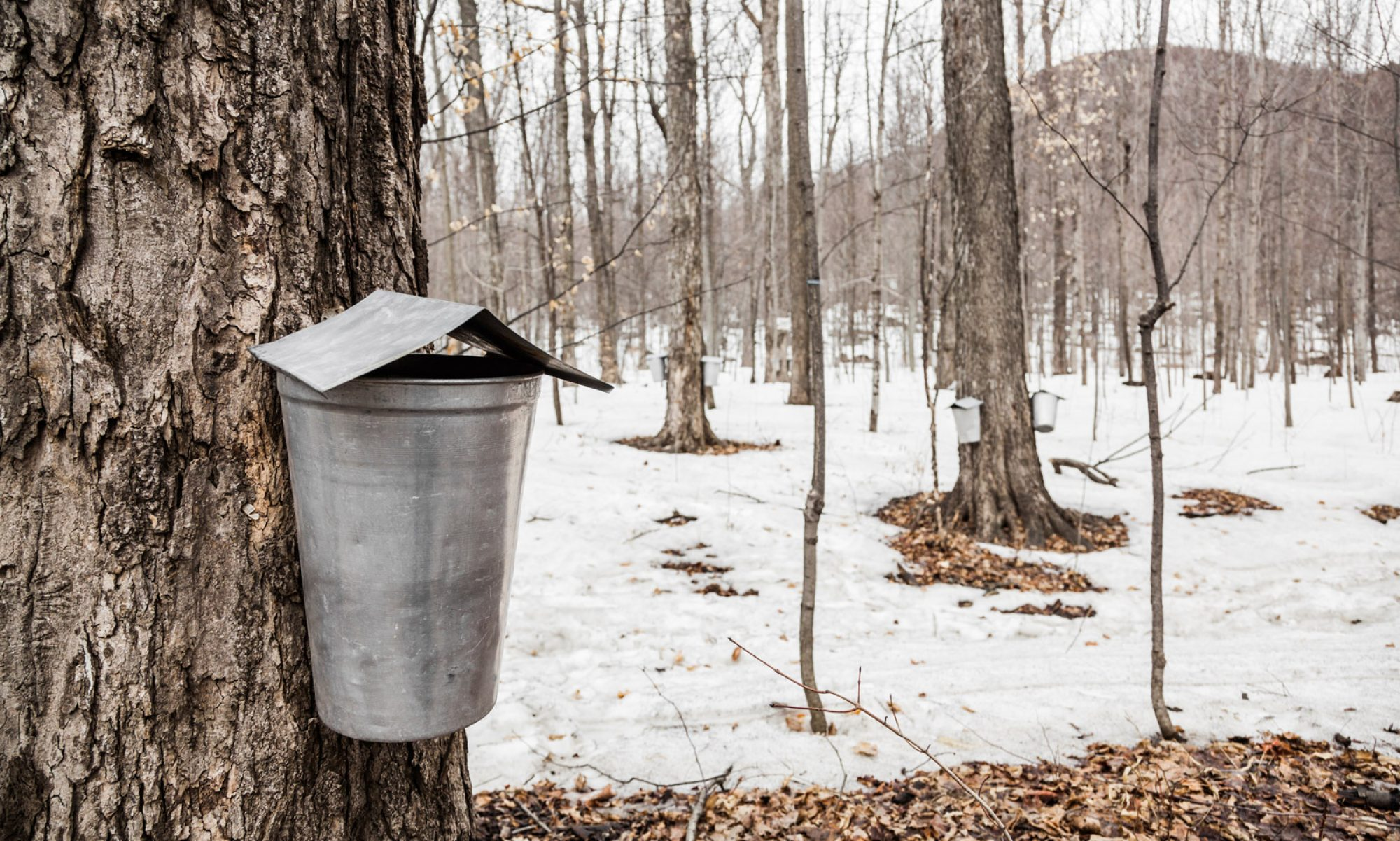 New Hampshire Maple Producers Association