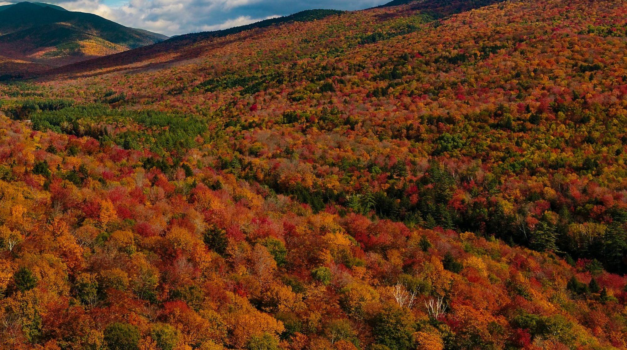 New Hampshire Maple Producers Association